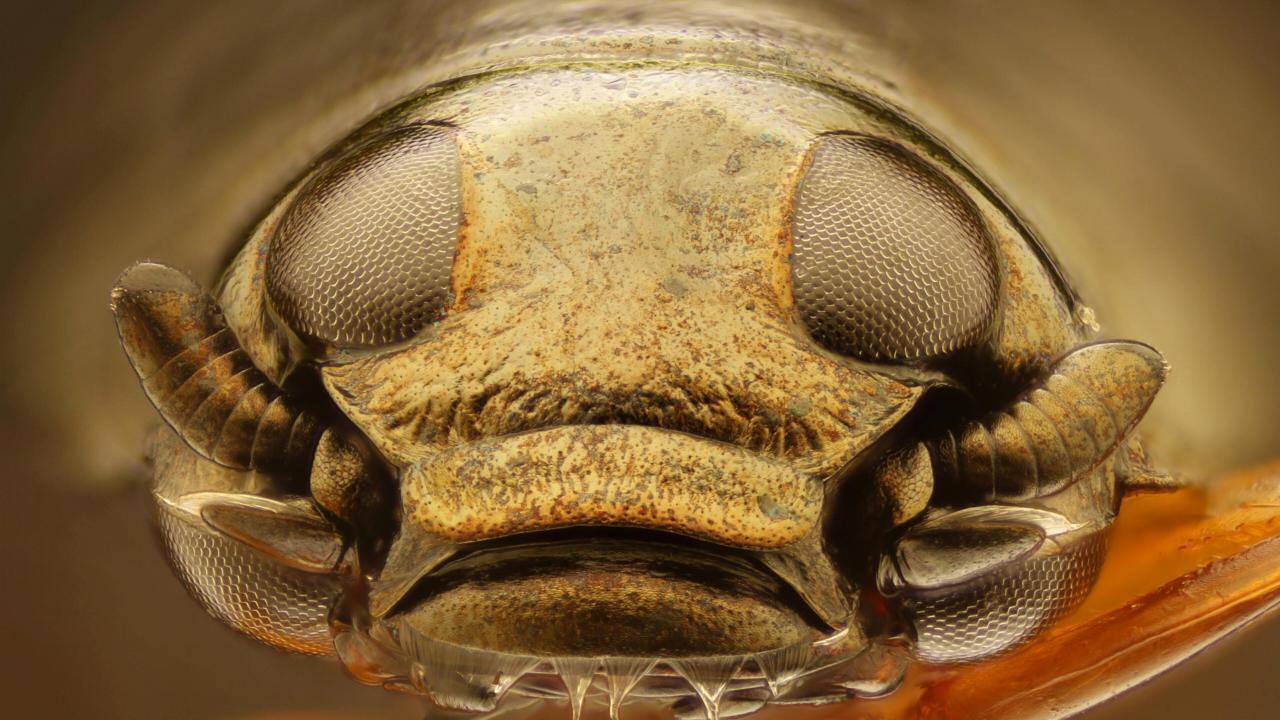 Top Insecten Met Albert Heijn Naturalis