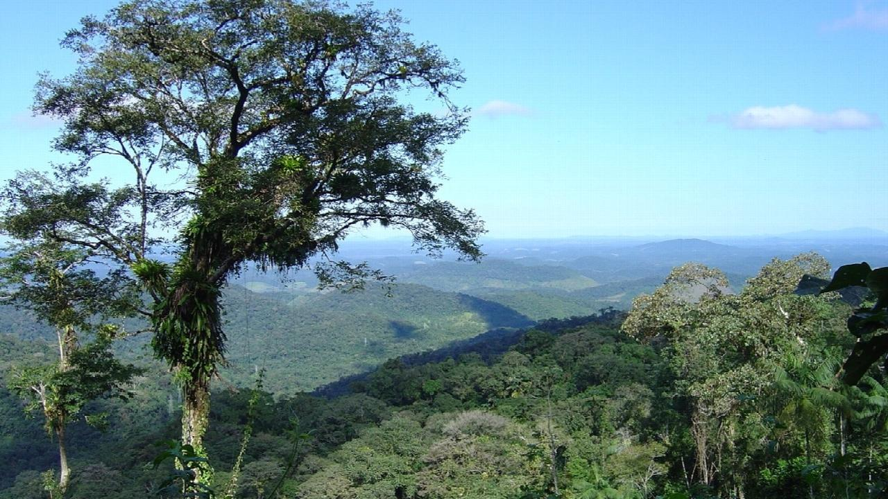 Atlantic Forest in SE Brazil