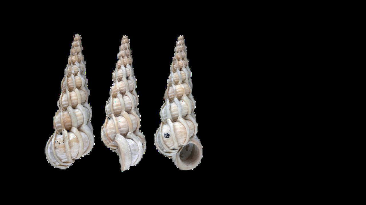 Wolf, G.C. Cadée & W. Renema: Fossiele schelpen van het Nederlandse strand.