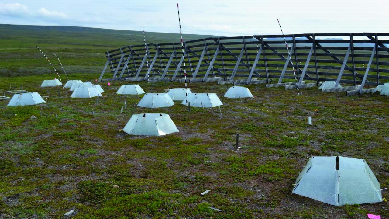 Climate change experiments in Toolik Field Staton, Alaska