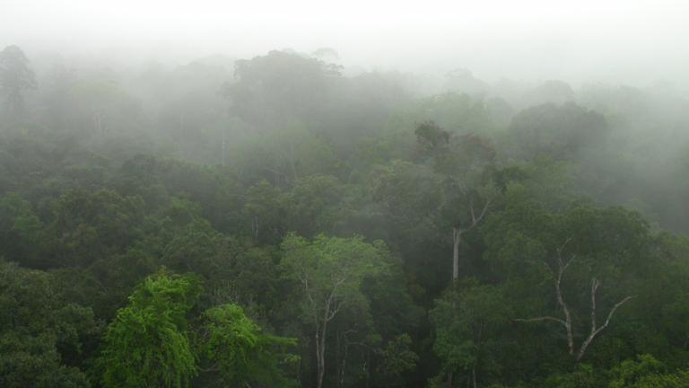 Amazonian-forest