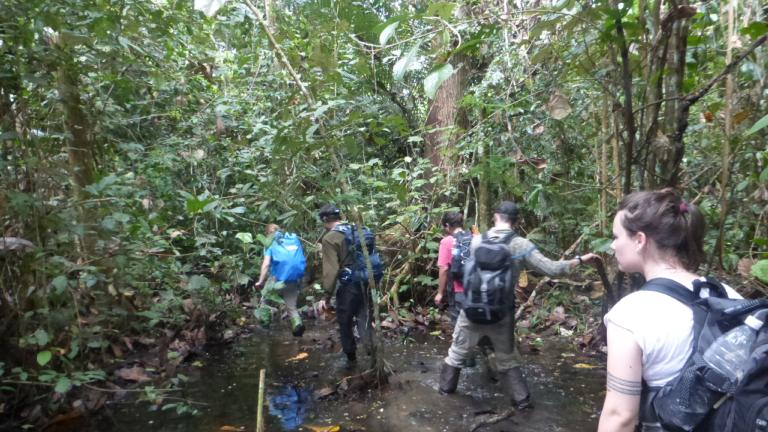 Hiking through the dense jungle to reach limestone outcrops