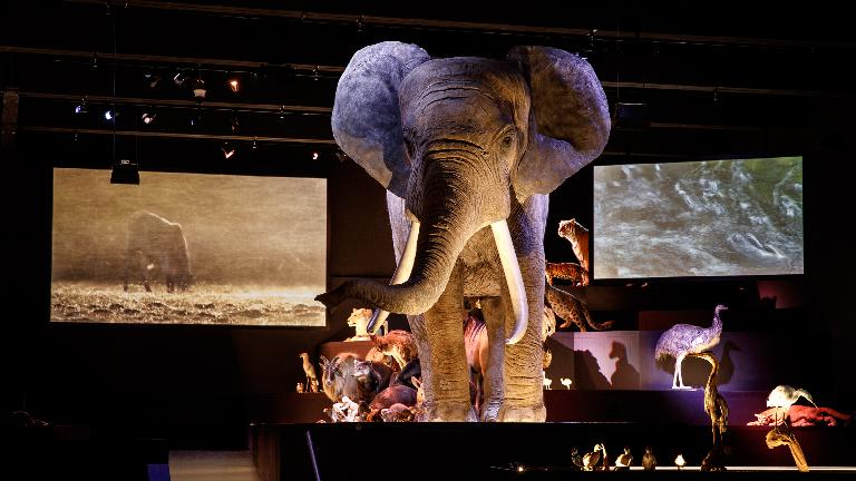 Olifant in zaal Leven