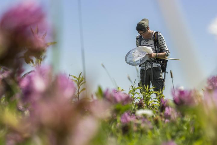 Biologist in a flowerfield