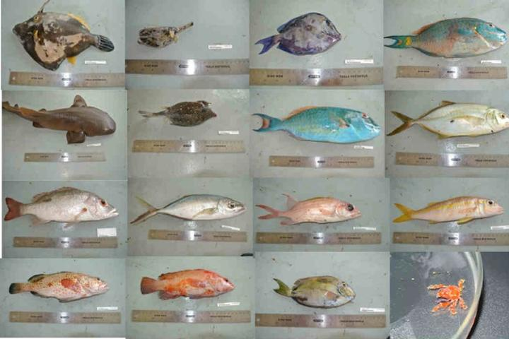 Different fish species