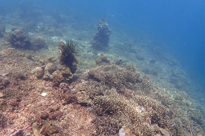 Coral reef murky water