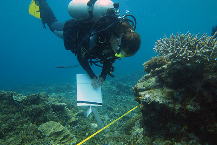 Sponge survey at the Spermonde archipelago, SW Sulawesi, Indonesia.