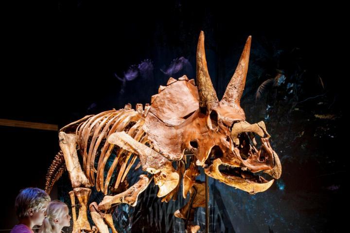 Dinotijd%20Triceratops%20Mike%20Bink%20Fotografie - Natuurwetenschappen voor kinderen ? Leuke tips, boeken en ideetjes...
