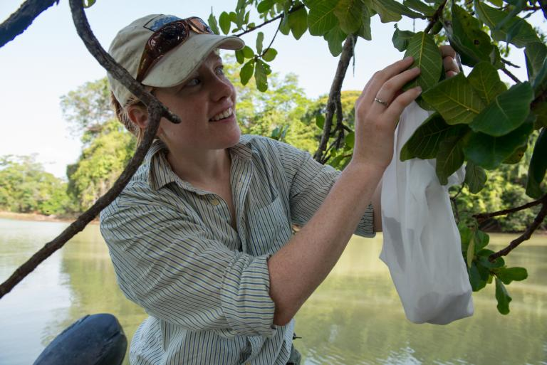 Aafke Oldenbeuving collecting figs in Panama