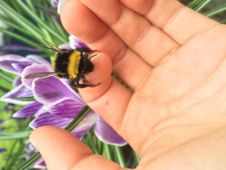 Bumblebee on hand