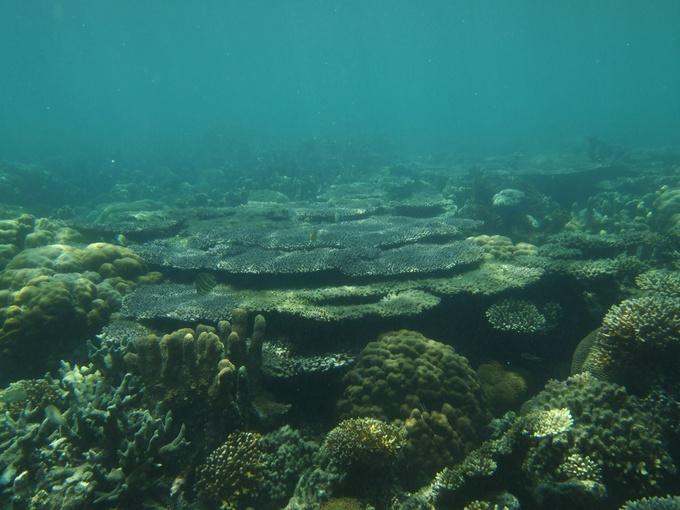 Ecology Indo-Pacific reefs